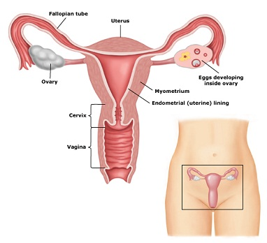 Caring For A Womans Body Care And Prevention Of Gyn Problems The